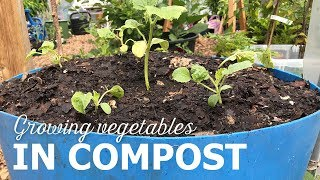 Growing vegetables in compost