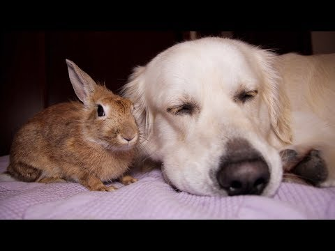 Dog and Rabbit Lay Down Together on the Bed