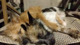 ハイサイ!愛犬物語のブログ、動画へようこそ(o^―^o)ニコ。今、私は、犬た...