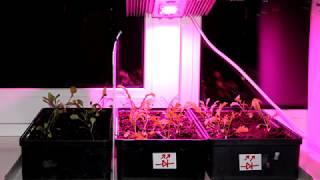 Тестування світлодіодної матриці повного спектру 50 Вт 220 В - вирощування руколи