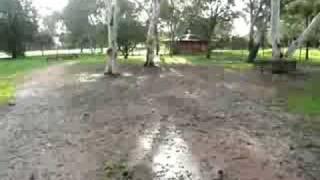 Husky at the Dog park