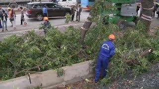 Tin tức 24h mới nhất hôm nay :  Hà Nội chặt hạ, di dời cây xanh trên đường Phạm Văn Đồng