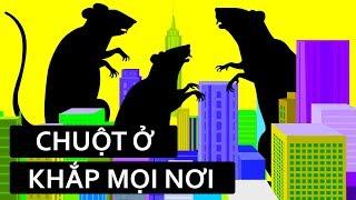 Tại sao các thành phố không thể thoát khỏi chuột