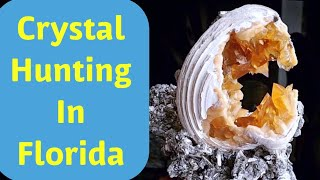 Crystal Hunting in Florida for Golden Calcite, Sharks Teeth & Fossils