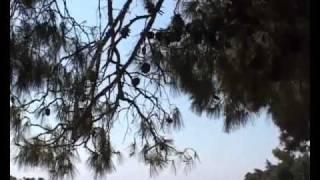 Camping Valdaliso - Rovinj