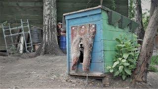 """""""Смсфинанс"""" помогает животным найти дом (проект с Базой реабилитации животных)"""