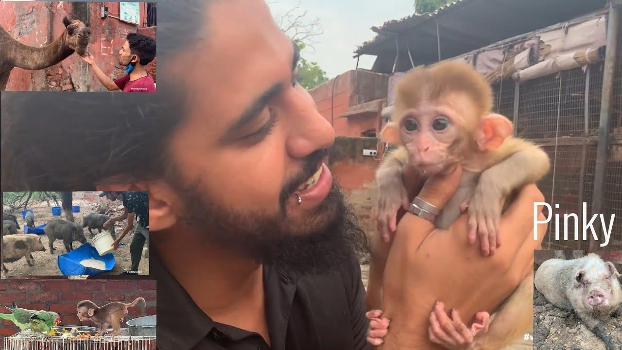 Baby Monkey Remembers Me? Wildlife Rehab. Tour