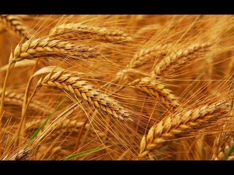 Крымское зерно. Результаты