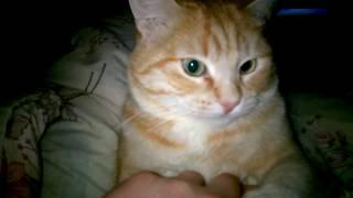 кот мстит в час ночи за маникюр