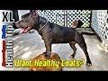 🔴 American Bullys & Pitbulls Pups Skin problems, Treatments & Advice ( Don't Cut his Nuts bro!!)