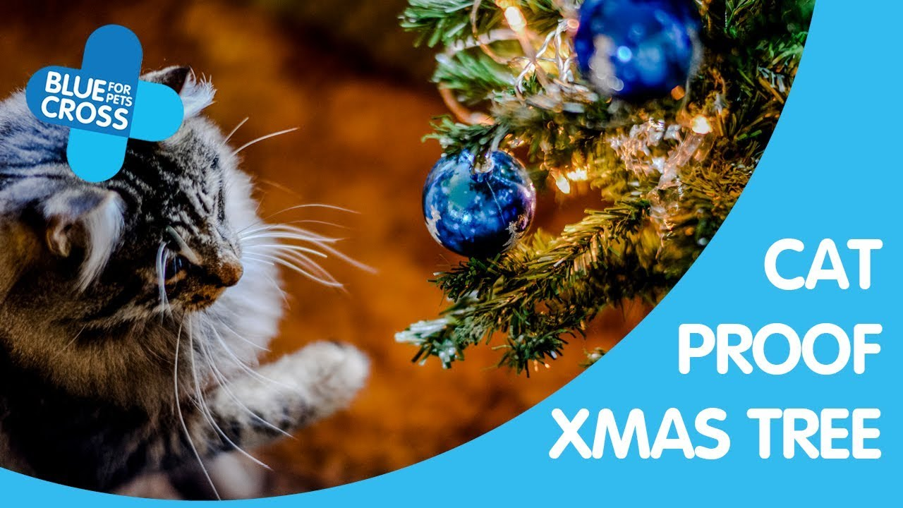 How To Cat Proof Your Christmas Tree.How To Cat Proof Your Christmas Tree Blue Cross Pet Advice