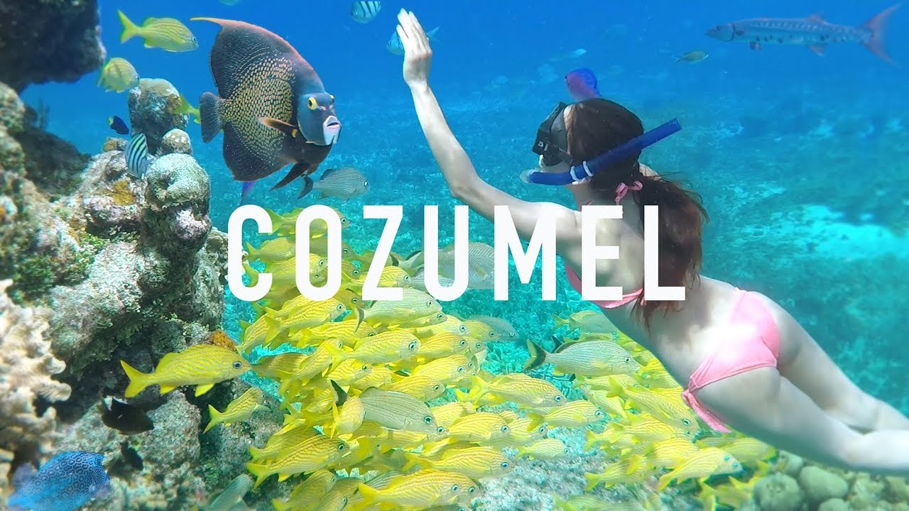 COZUMEL SNORKELING TIPS & Creepy Animals - YouTube