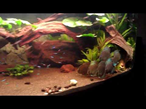juwel aquarium 450 liter 2 youtube. Black Bedroom Furniture Sets. Home Design Ideas