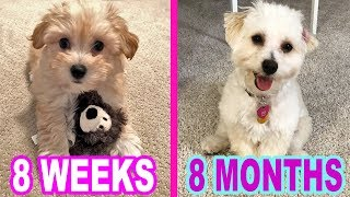 PUPPY GROWS UP INTO A DOG!! 8 WEEKS TO 8 MONTHS 💕🐶