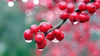 КАЛИНА ПОЛЬЗА И ВРЕД | чем полезна калина? калина лечебные свойства, как едят калину?