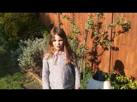 Little Apple Tree