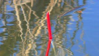 Рыбалка на летнюю удочку Ловля карася на поплавок в конце января My fishing