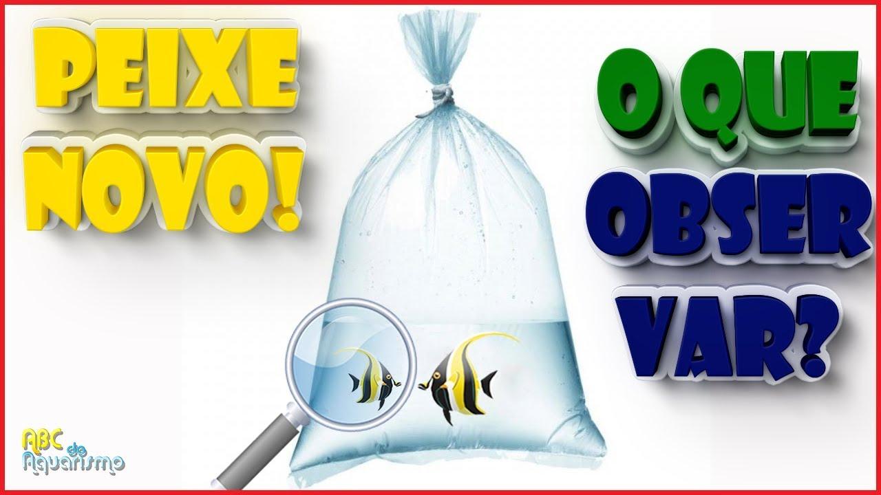 O QUE OBSERVAR AO COMPRAR UM PEIXE NOVO? | #ABCDOAQUARISMO - EP310