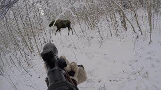 Охота на кабана 2016