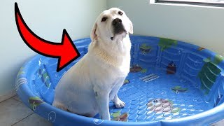 BUILDING MY PREGNANT DOG A NURSERY!!