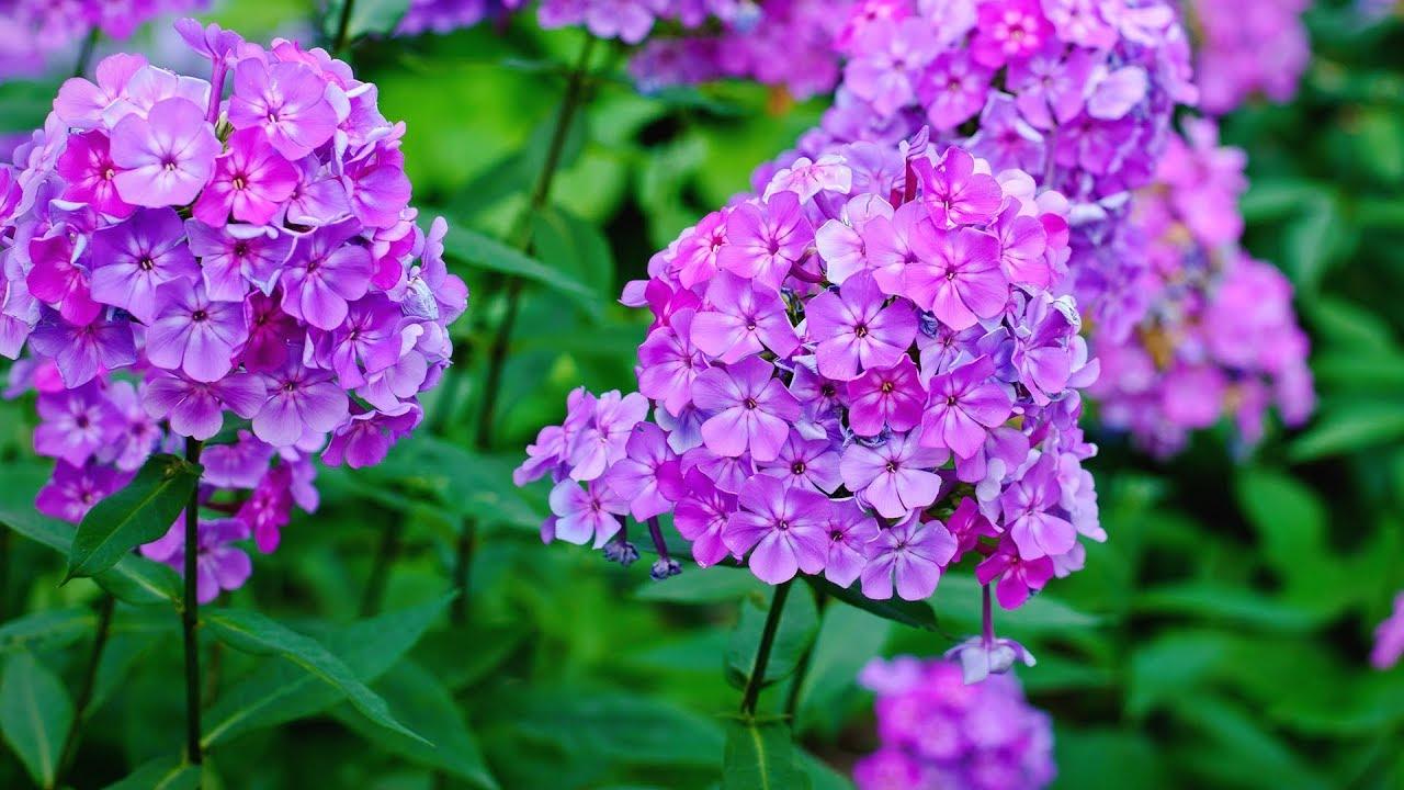 Best Landscape Flowers For Tennessee U2013 Family Plot