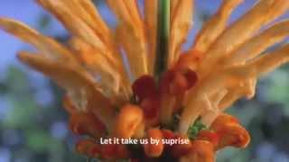 Maher Zain - Open Your Eyes | No Music
