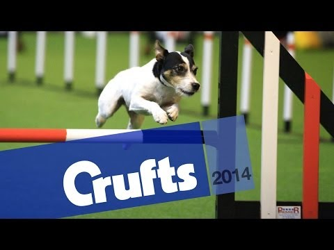 Rescue Dogs Agility | Crufts 2014
