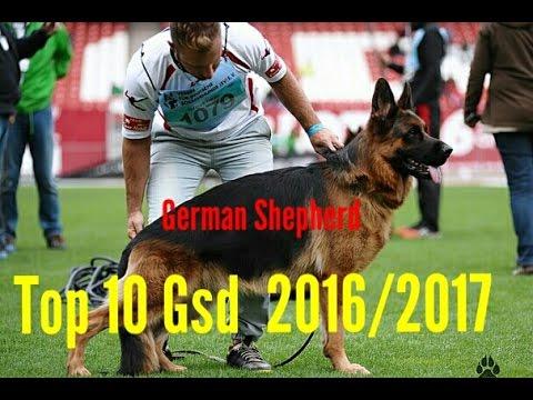 World Top 10 German Shepherd in 2016/2017