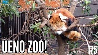 Ueno Zoo! Subtokyo 175