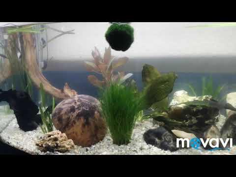 Aqua/Fluval Vicenza 180 Liter / Panoramascheibe  Aufbau mit versteckten Außenfilterzugang