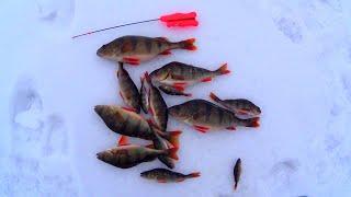 ОКУНИ на реке ВОРОНЕЖ Рыбалка на Водохранилище