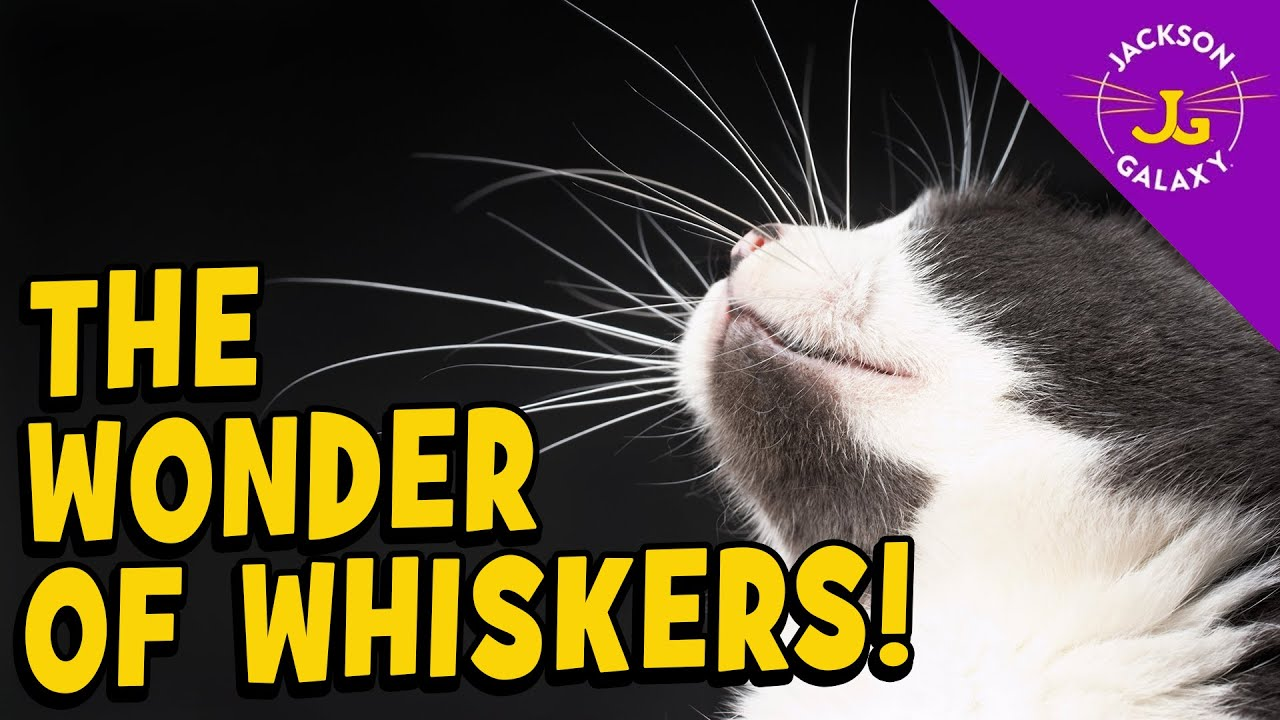 The Wonder of Whiskers!