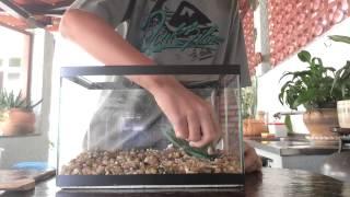 Montando aquário comunitário de 9 Litros HD