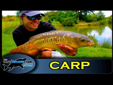 Beginners Guide to catching Carp on surface Baits - The Totally Awesome Fishing Show