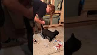 Funny short cat video #2