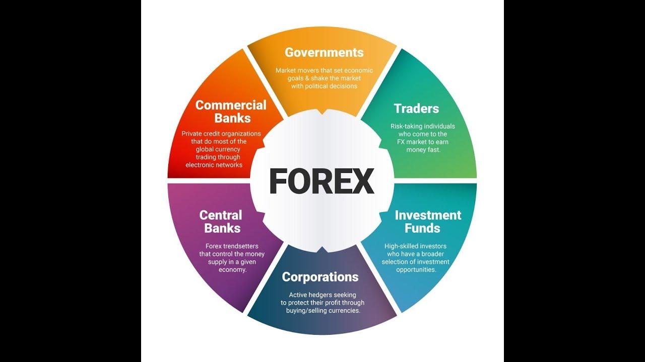 7 pasos forex