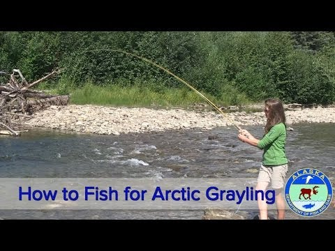How To Fish For Arctic Grayling