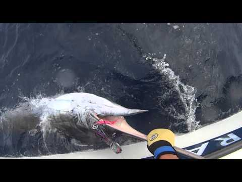 Marlin fishing New Zealand west coast.