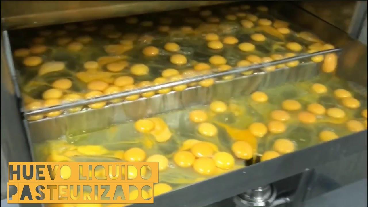 huevos liquidos pasteurizados colombia