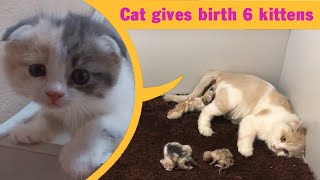 Cat Gives Birth To 6  Kittens - Cat Giving Birth - Part 2