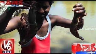 More Than 200 Giant Tiger Prawns Found in Vishaka Fishing Harbour   Teenmaar News