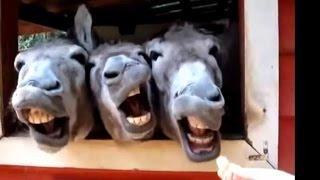 Funny Videos 2015 - Grappige Dieren Maken Van Grappige Geluiden Compilatie