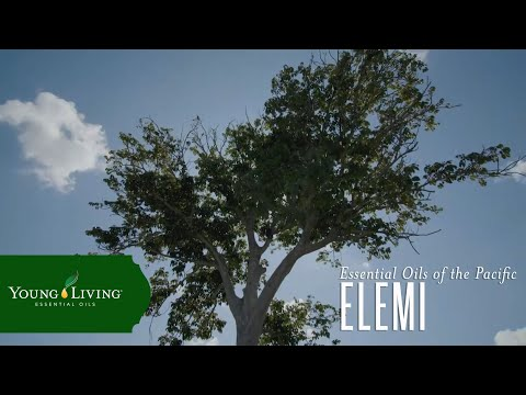 essential-oils-of-the-pacific:-elemi