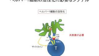 T細胞活性化とT細胞受容体