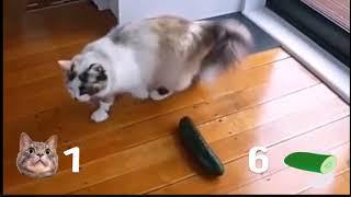ПРИКОЛ|коты против огурцов!|РЖАЧ