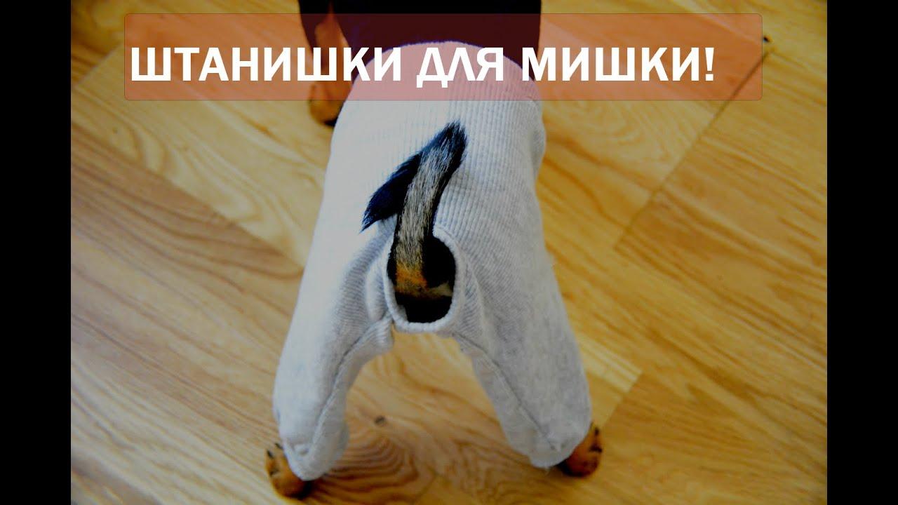 Штанишки для кота