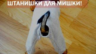 Штаны для той-терьера - готовая выкройка(Шить для своего питомца - сплошное удовольствие, поэтому я делюсь с вами выкройкой трикотажных закрытых..., 2014-07-11T17:25:21.000Z)