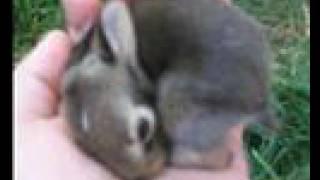 Wild Baby Bunnies - 8 days old