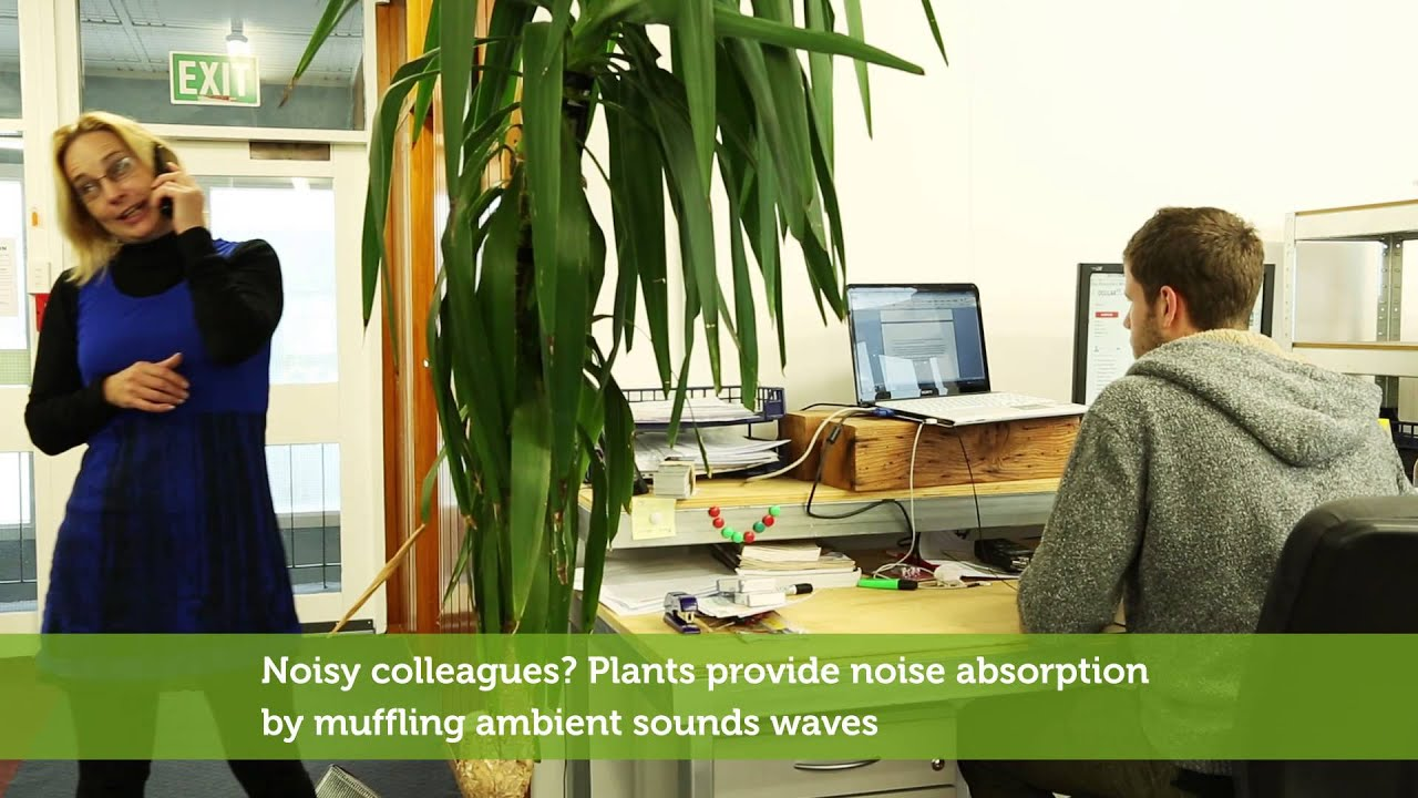Indoor Plants   The Perfect Office Pick Me Up!