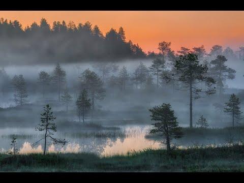 Видеоурок по географии 6 класс озера и болота